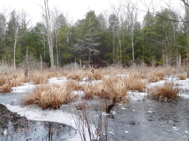 mud_pond_preserve_Nassau_