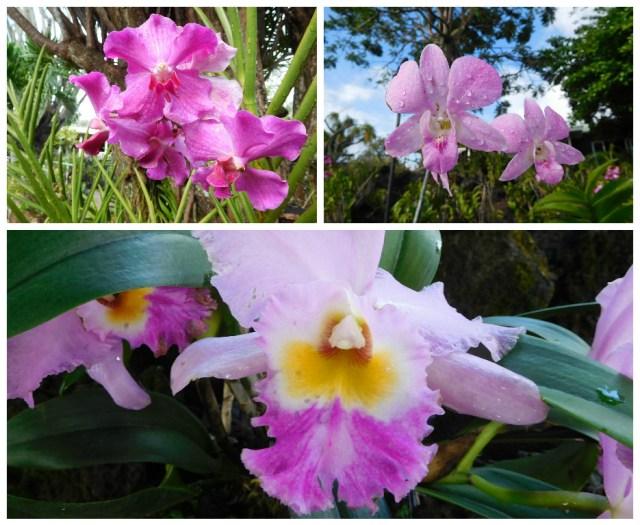 plantation_gardens_kauai_1