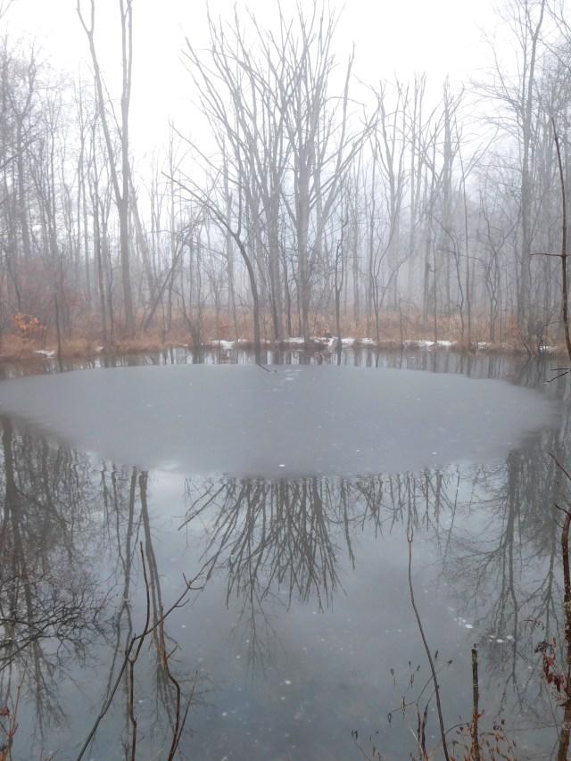 woodcock_preserve_clifton_park_3