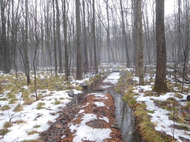 woodcock_preserve_clifton_park_4
