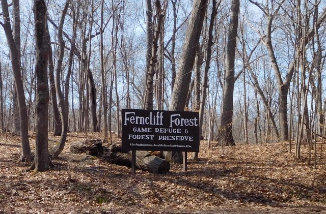 Ferncliff_Forest_rhinebeck