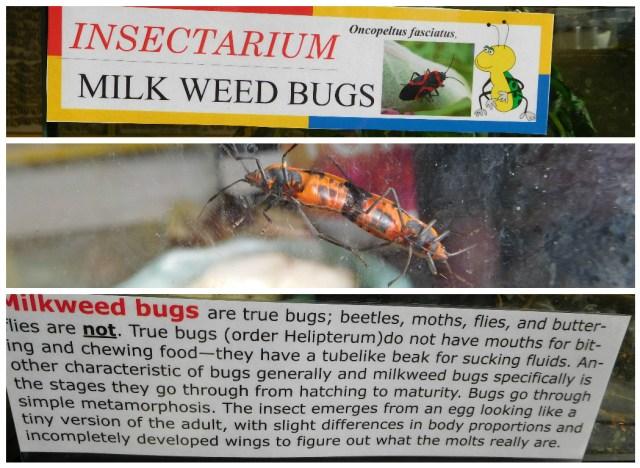 insectarium_philadelphia_88