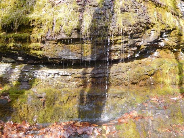 tanbark_trail_phoenicia_park