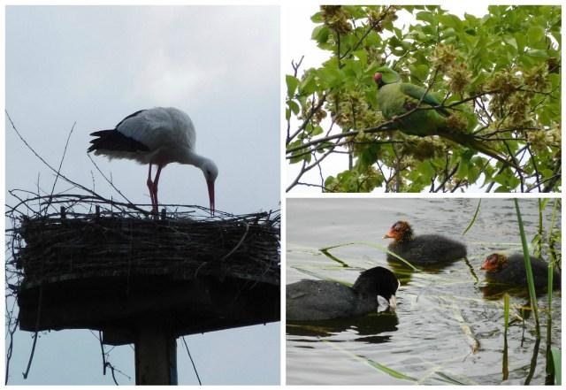 birds_amsterdam