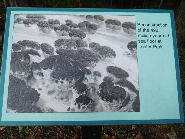 stromatolites_saratoga