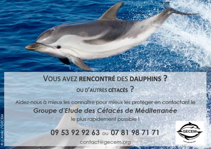 Dauphin bleu et blanc, outil de communication Groupe d'Etude des Cétacés de Méditerranée