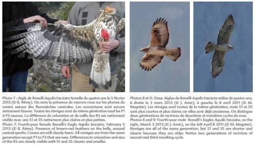 Aigle de Bonelli, Publication revue Nature de Provence