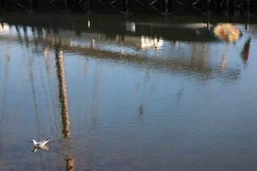 Une mouette vient couper le mât d'un bateau se refletant dans l'eau.