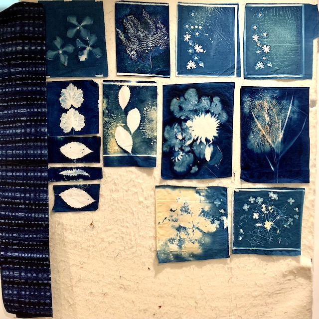 dozen blue and white cyanotype prints of leaves and flowers on fabric, pinned to design wall