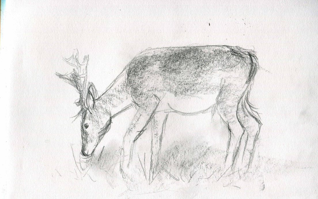 deer-sketch-blog-7