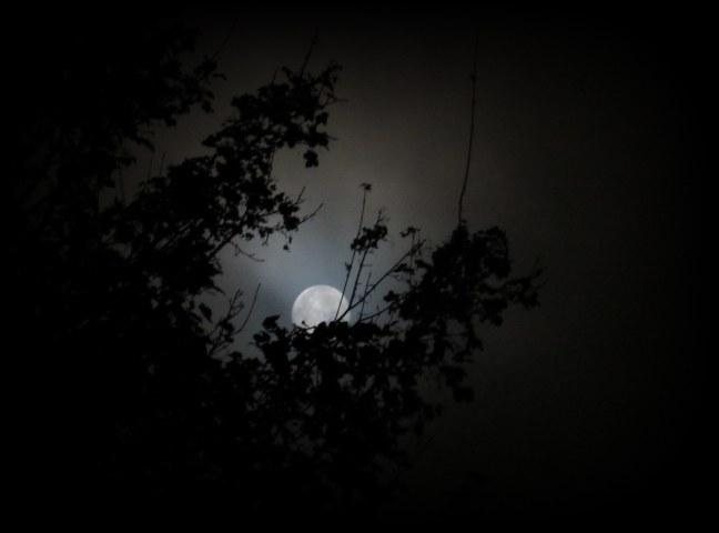 moon90