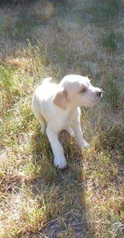 Petite chienne des voisins qui attend d'être adoptée