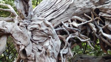 Wooden Reindeer Sculpture