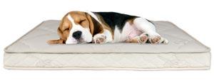 Sleep EZ Latex Dog Mattress