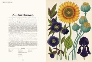 das-museum-der-pflanzen_kulturblumen