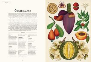 das-museum-der-pflanzen_obstbaeume