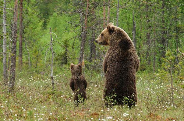 Padres-E-Hijos-En-El-Reino-Animal24