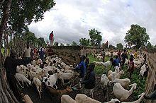 die Landwirtschaft stellt den Hauptwirtschaftszweig des Landes dar - Bild: Wikipedia