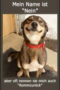 hund nein