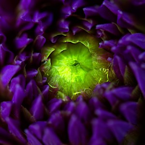 Purple and Green Flower