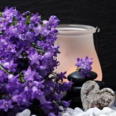 flowers-2065789_640