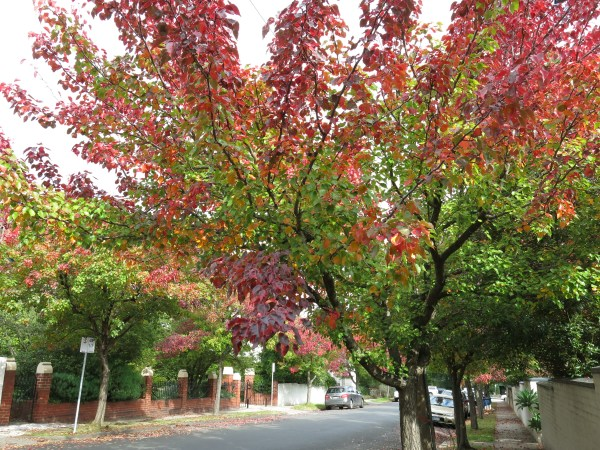 melbourne autumn