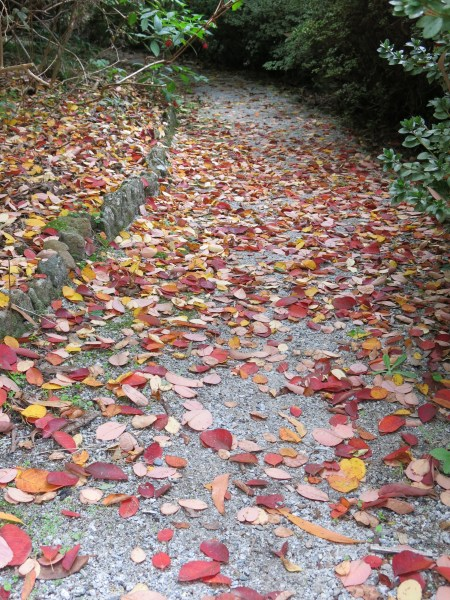dandenong ranges autumn 04