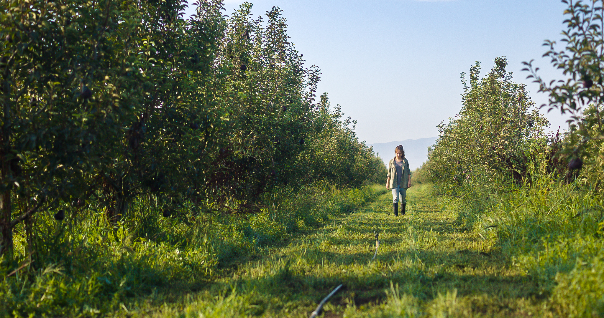 ANDY WALKING WIDE ORCHARD_100_A_001