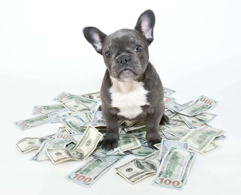 how much should I pay my pet sitting employee