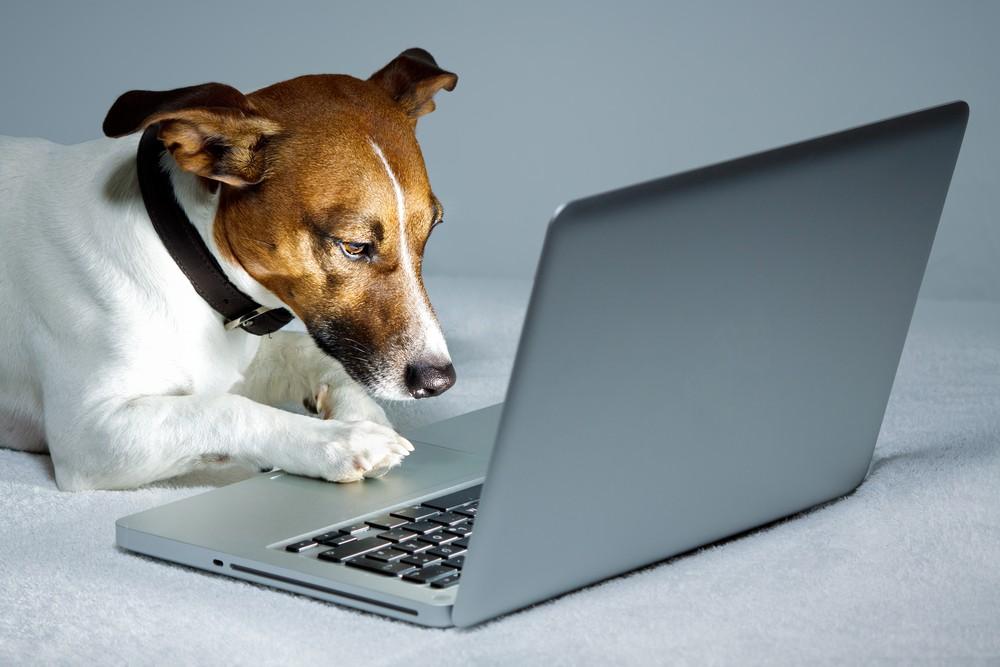 make money rover dog sitter