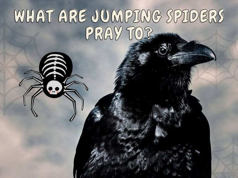 what are jumping spiders pray to