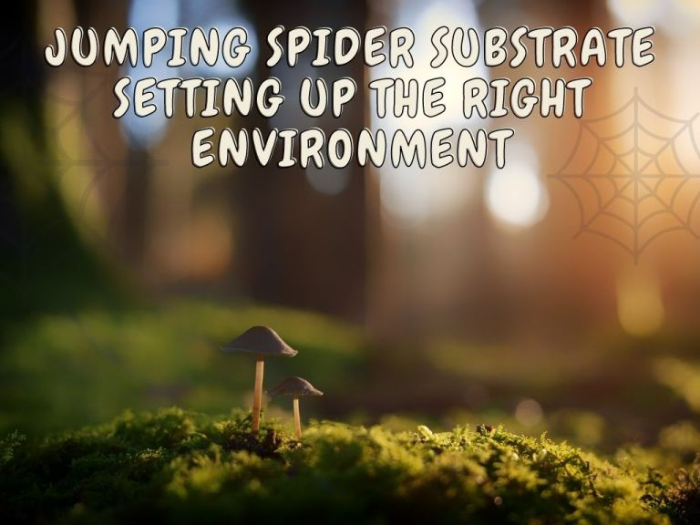 Jumping Spider Substrate