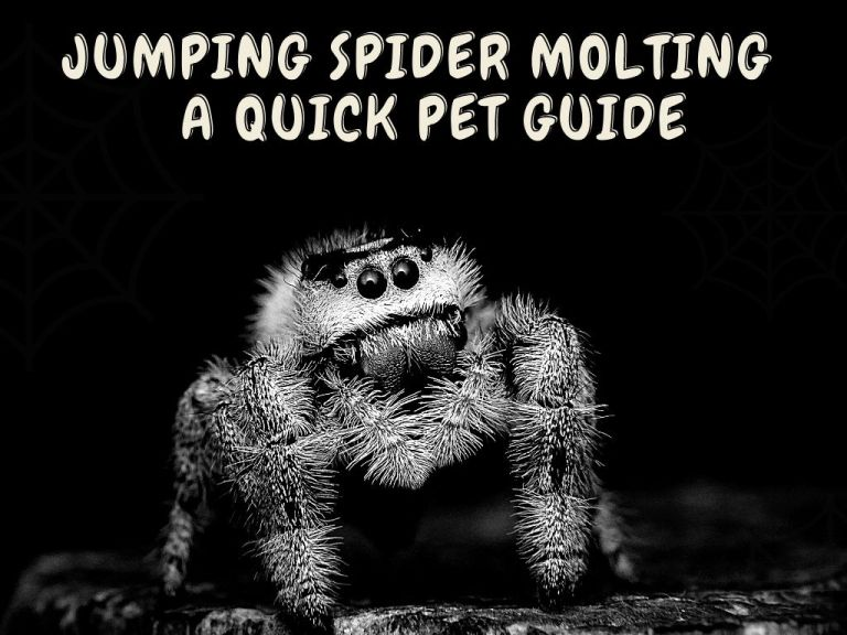 jumping spider molting