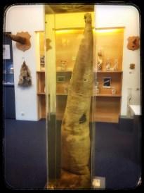 Sperm Whale penis, Icelandic Phallological Museum