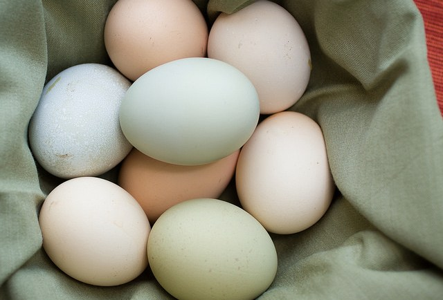 Why do Americans Refrigerate Eggs