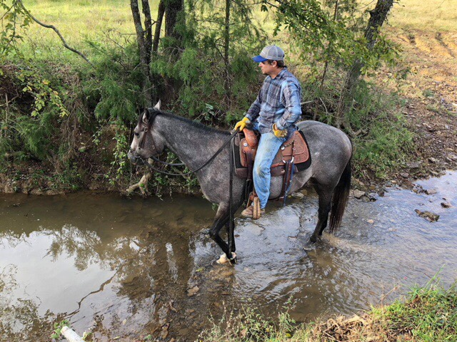 Appaloosa in creek