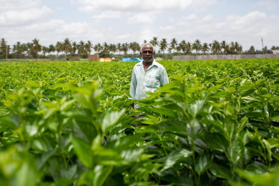 Indian farmer K.V. Muniraju stands in the middle of one of his fields