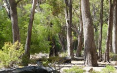 Saving Ludlow Tuart Forest