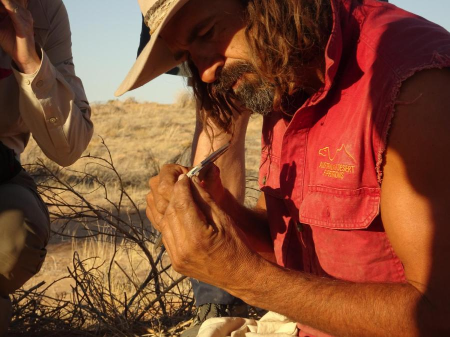 Dr+Max+Tischler%2C+from+Australian+Desert+Expeditions%2C+measures+a+tiny+skink%2C+caught+overnight.+Photo%3A+Chris+Johnston
