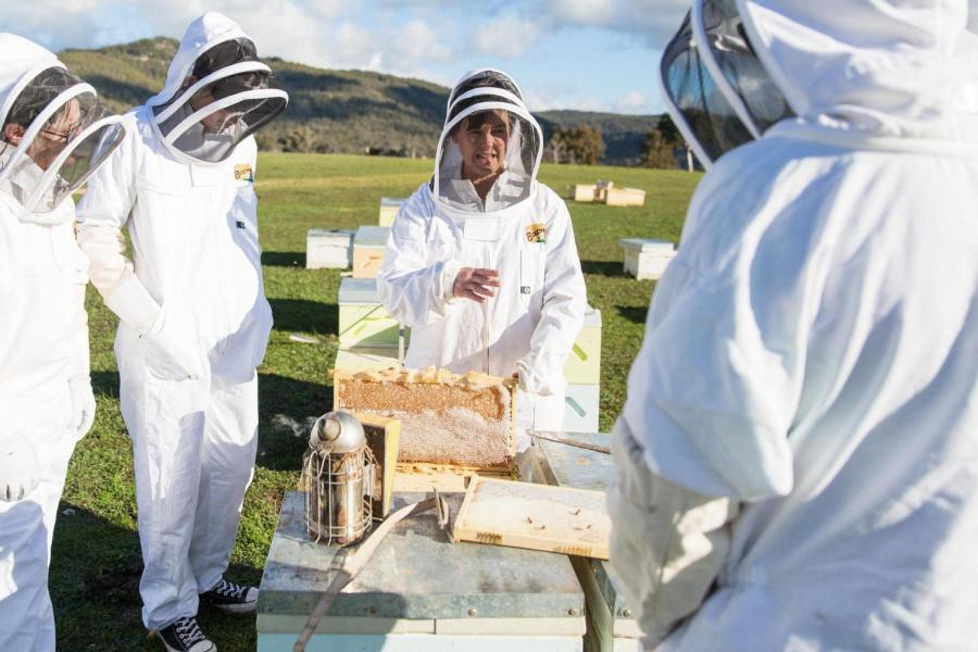 Apiarist Jodie Goldsworthy says the destruction caused by Australia's Black Summer of 2019-20 will have a major effect on the ability of trees to produce flowers that beekeepers may access. Image: Supplied/Beechworth Honey