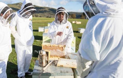 Apiarist Jodie Goldsworthy says the destruction caused by Australia's