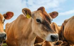 Navigation to Story: Animal agriculture: Innovation or alternatives?