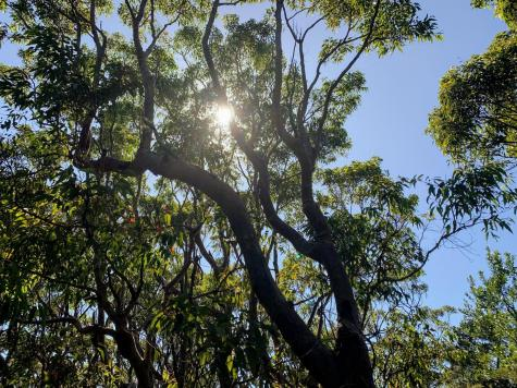 Sunlight shining through trees, Kamay National Park NSW