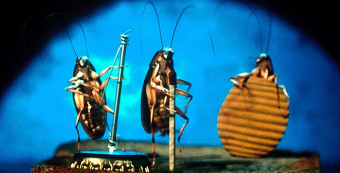Five Reasons Why God Created Roaches | June's Journal image 2