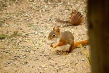 In der Umgebung des Cape Cod Museum of Natural History konnten wir viele Tiere in der freien Wildbahn beobachten.