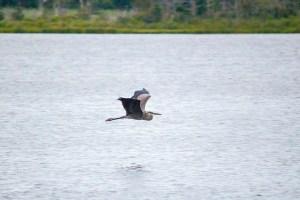 Ruhetag am See - Tierbeobachtung