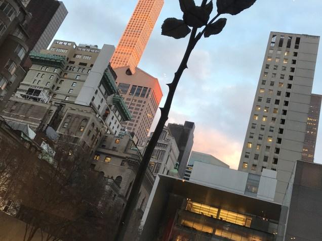 MoMA Rose.JPG