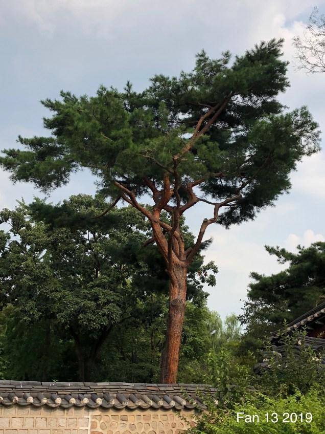 2019 Changdeokgung Palace by Fan 13. 15