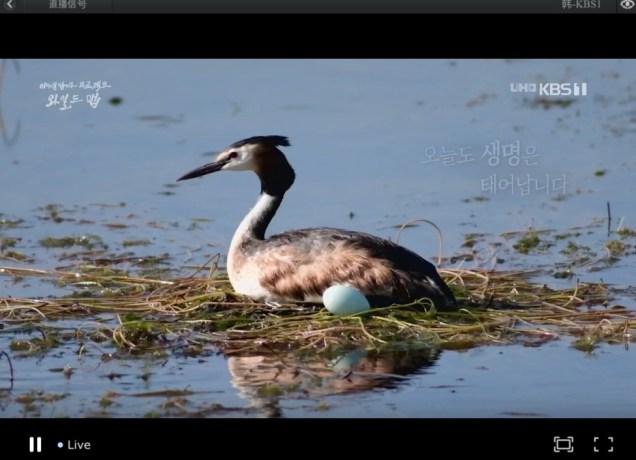 2019 10 3 Jung Il woo in Wild Map Documentary. Episode 1.9