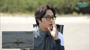 Jung Il-woo live at KBS Wild Map. Great Crested Grebe. Cr. KBS 6